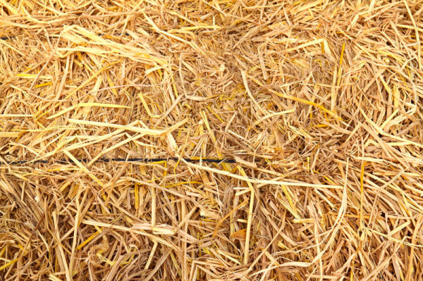05-straw picture HD picture