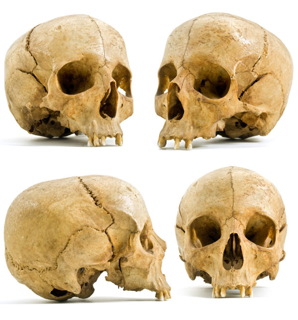4 different angle skull HD pictures