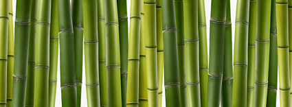 Bamboo close-up picture material