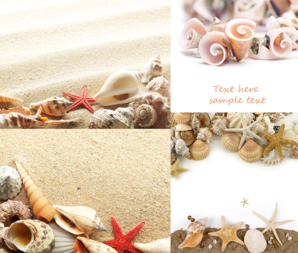 Beach shells HD pictures