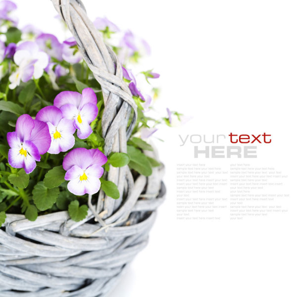 Beautiful flower background 04--HD pictures