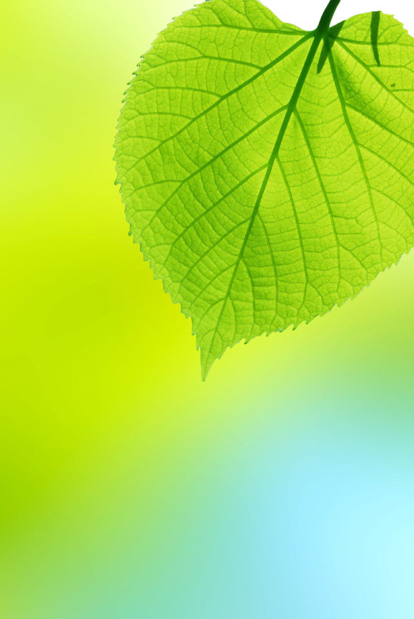 Beautiful green leaf background 01-HD pictures