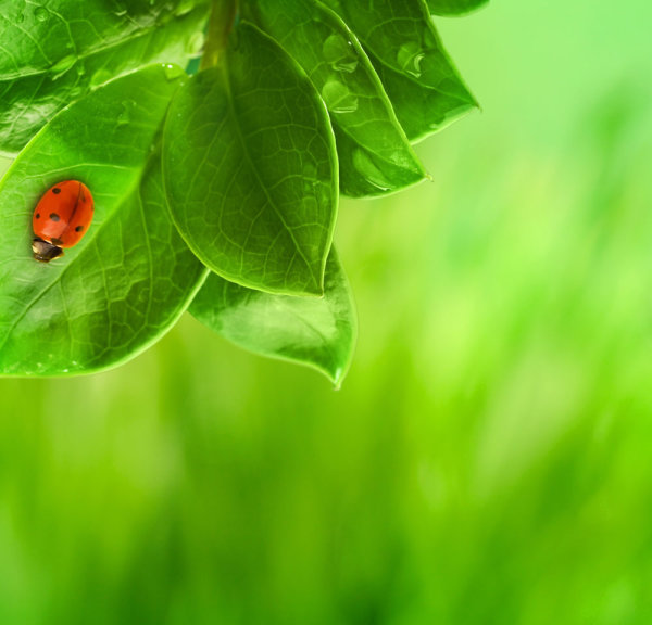 Beautiful green vegetation 04--HD pictures