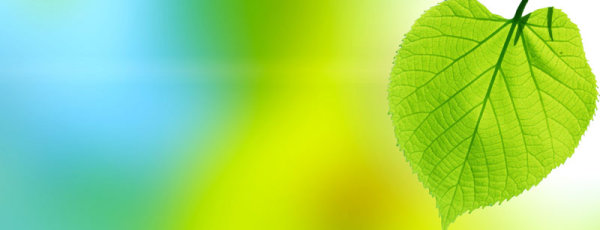 Beautiful greenery backgrounds 02-HD pictures