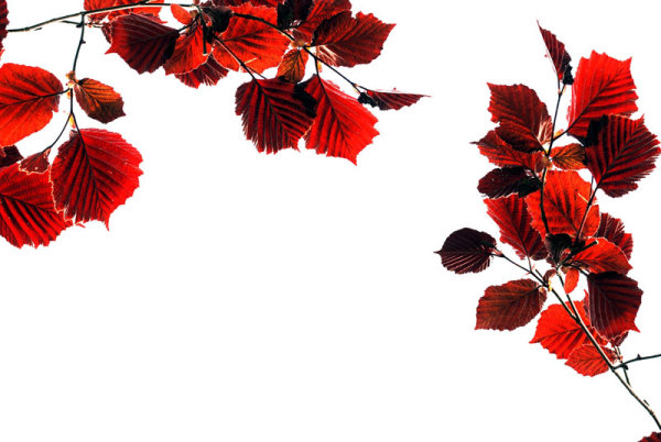 Beautiful red leaves 10--HD pictures