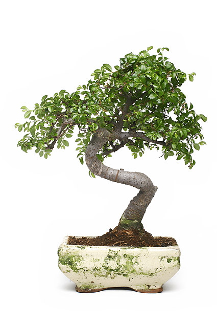 Bonsai picture material-2