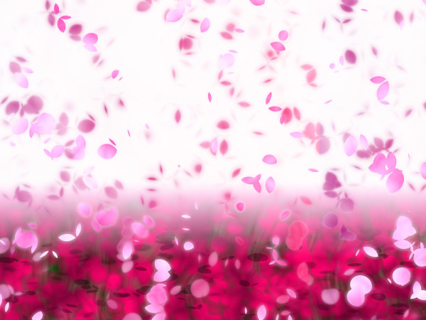 Dream petals dancing background high definition pictures