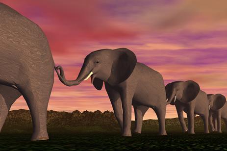 Elephant 3D creative design pictures