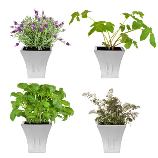 Flower pot plants 02--HD pictures