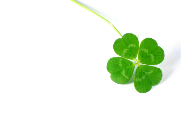 Four-leaved clover picture material