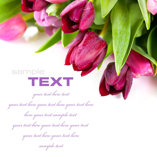 Fresh flowers backgrounds HD pictures 1