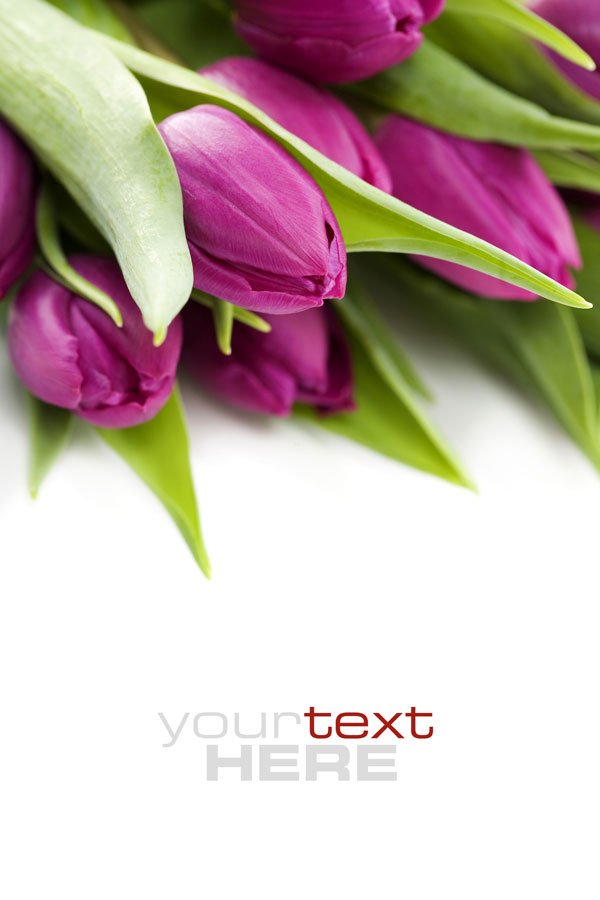 Fresh flowers backgrounds HD pictures 2