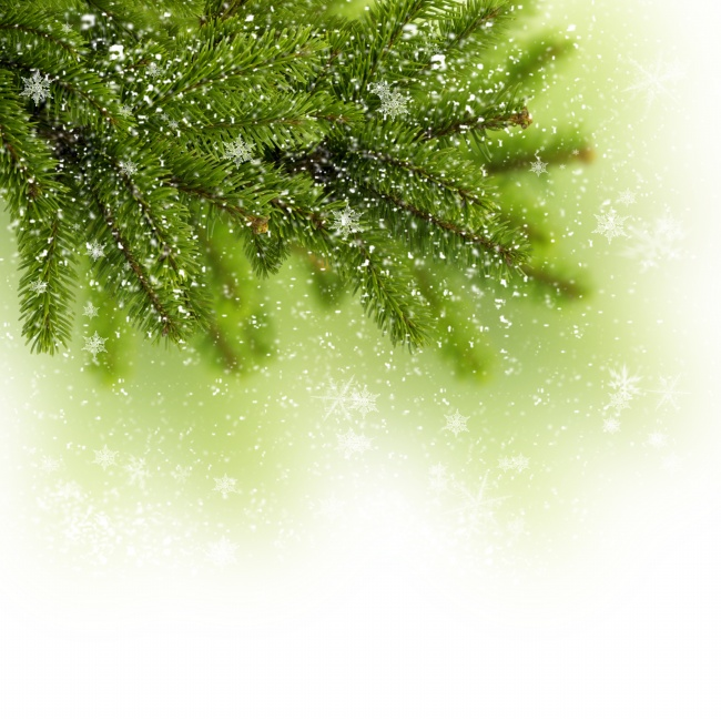 Green Christmas trees background pictures