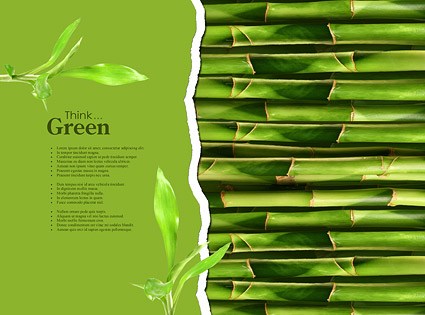 Green Evergreen picture material