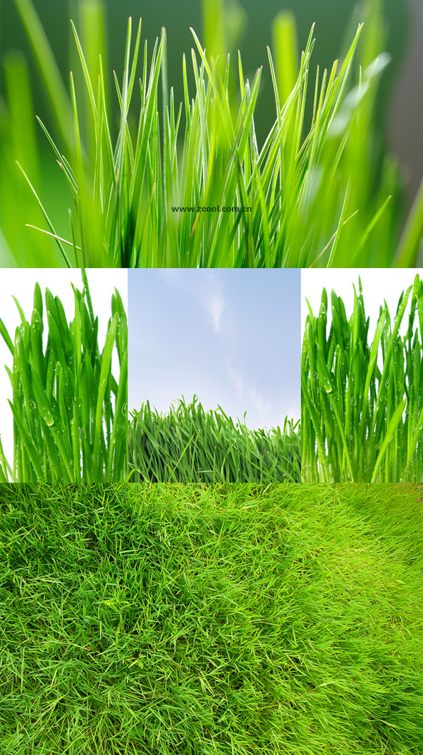 Green grass-grass feature HD pictures 1 (5P)