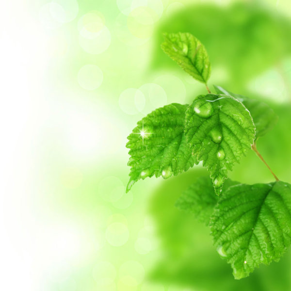 Green leaf background 01-HD pictures