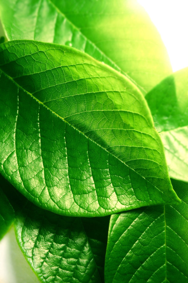 Green leaf close-up high definition pictures-2