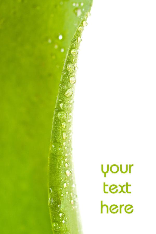 Green leaf HD Photo-2