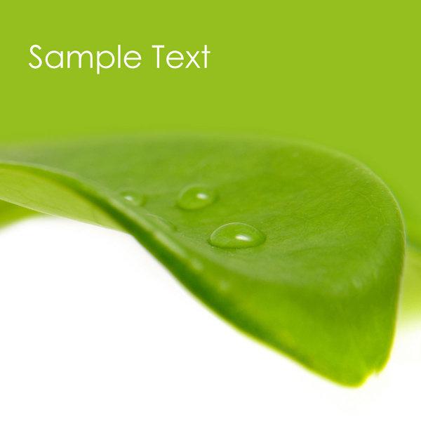Green leaf HD Photo-3