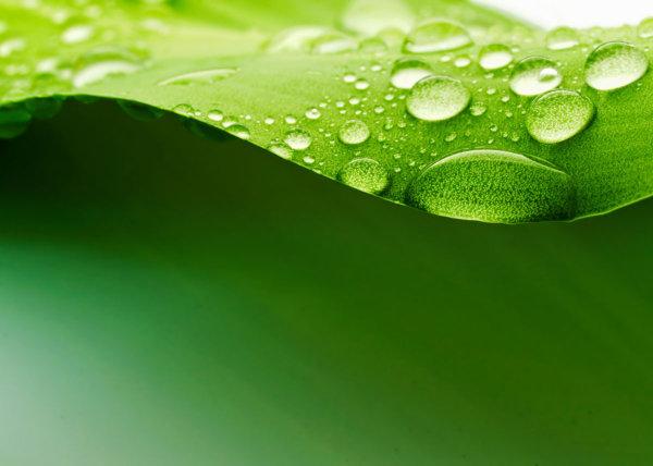 Green leaf HD Photo-5