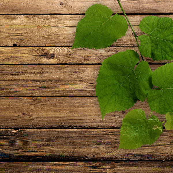 Green leaf wood background 01-HD pictures