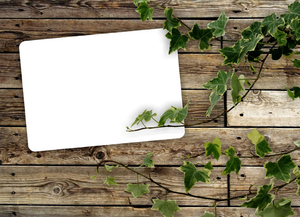 Green leaf wood background 05-HD pictures