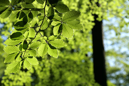 Green life leaves picture material