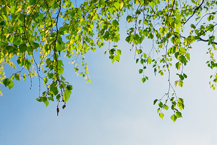 Green under the blue sky picture material