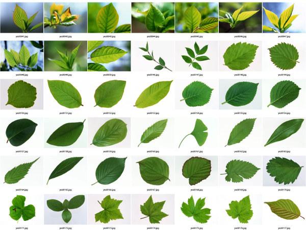 Leaf HD Photo album-1