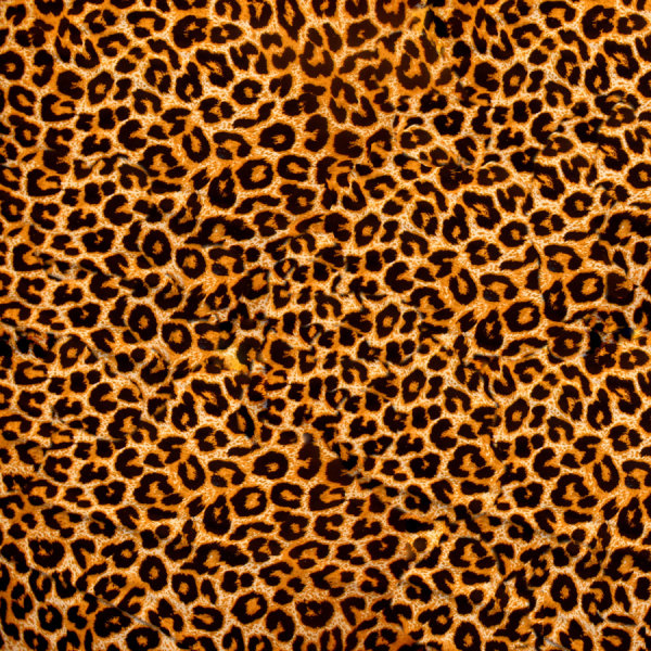 Leopard cashmere fabric HD pictures-2