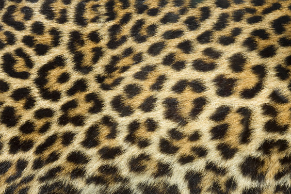 Leopard cashmere fabric HD pictures-3