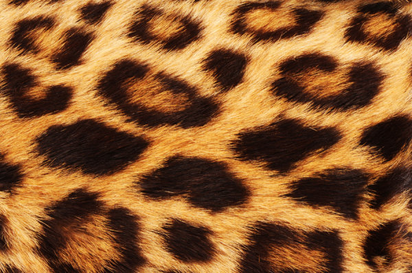Leopard cashmere fabric HD pictures-4