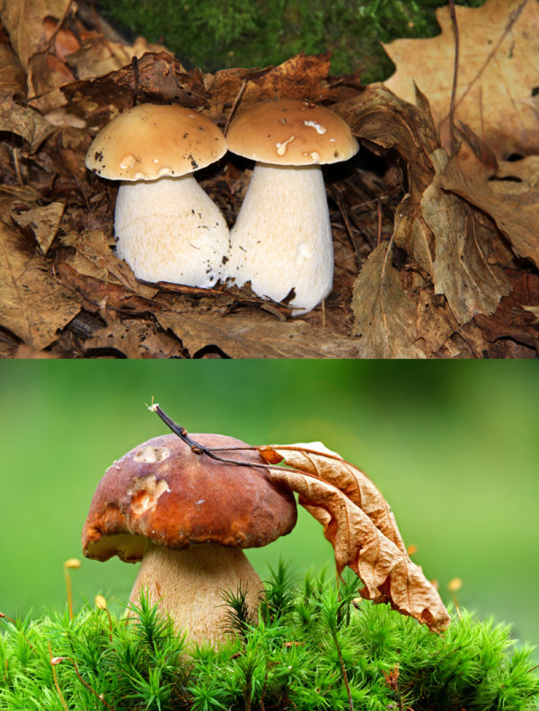 Mushroom   HD pictures 3