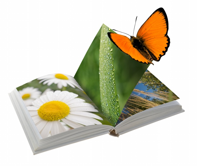 Natural plant picture book