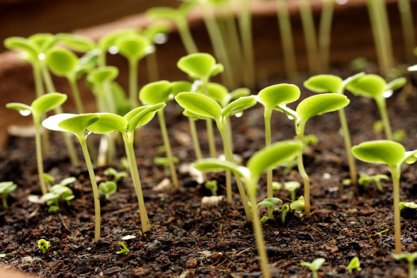 Plant germination of picture material