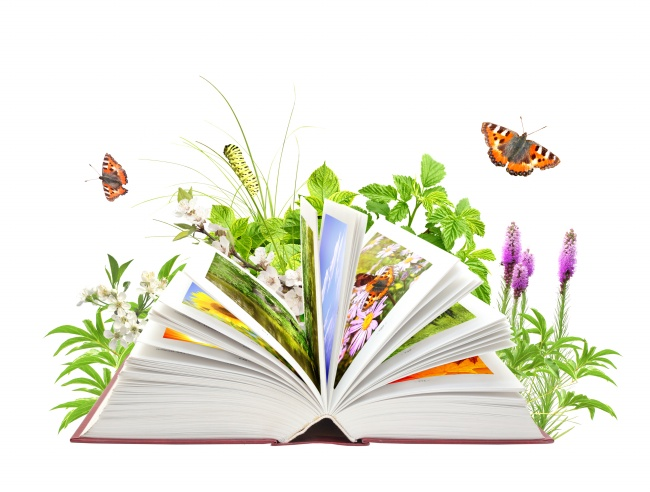 Plant picture book download