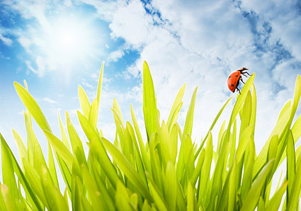 Plants and Ladybug picture material-1