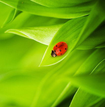 Plants and Ladybug picture material-7