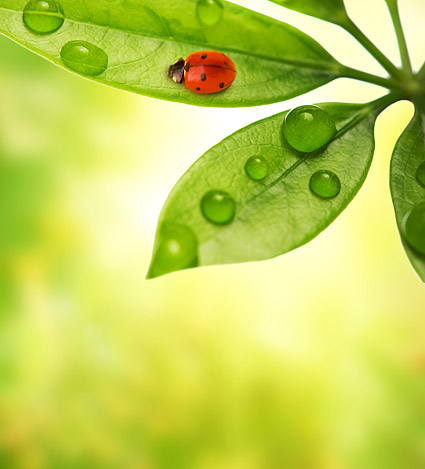Plants and Ladybug picture material-8