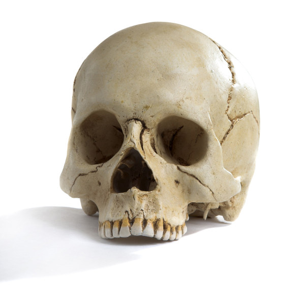 Skull HD pictures