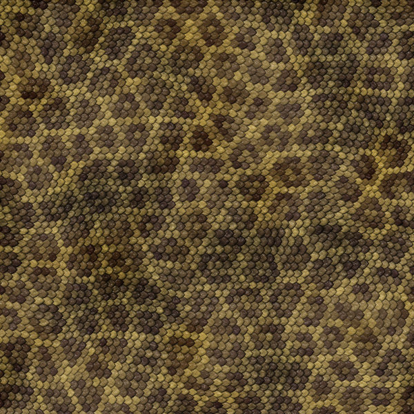 Snake skin texture 04--HD pictures