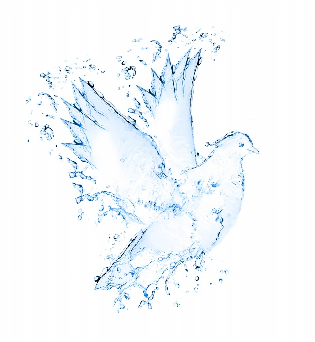 Spray formed Dove pattern picture