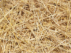 02-straw picture HD picture