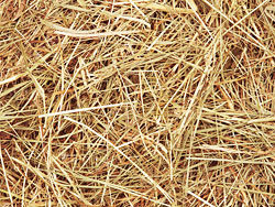 04-straw picture HD picture