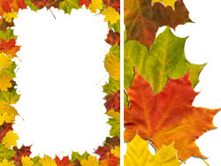 {05} the five leaf material border HD pictures