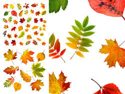 Autumn leaves HD pictures