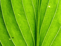 Background of green leaves feature picture material
