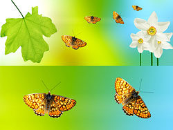 Beautiful green leaf background 03-HD pictures