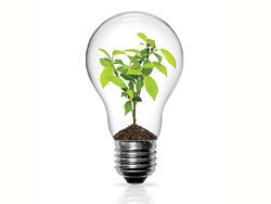 Bulb 03-HD pictures