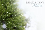 Christmas tree green leaf backgrounds HD pictures